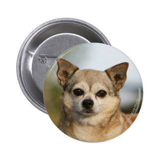 Chihuahua Headshot Pinback Button
