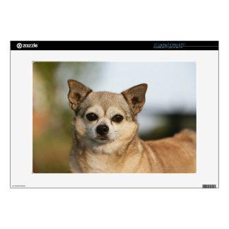 Chihuahua Headshot Skin For Laptop