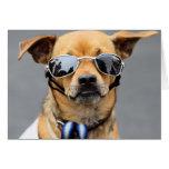Chihuahua - Hello Ladies! Greeting Card