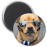 Chihuahua - Hello Ladies! Magnets