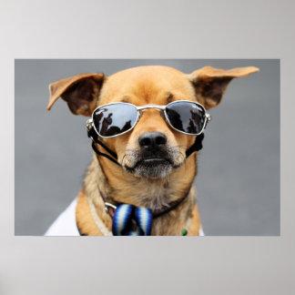 Chihuahua - Hello Ladies! Poster