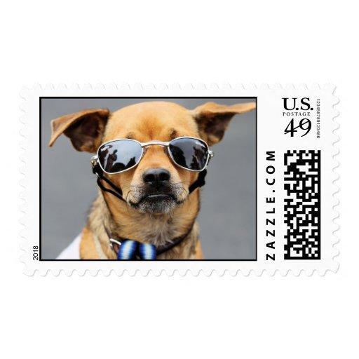 ¡Chihuahua - hola señoras! Sellos