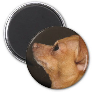 Chihuahua Imán Redondo 5 Cm