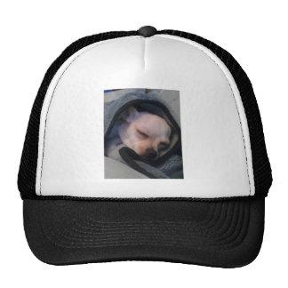 Chihuahua in a blanket trucker hat