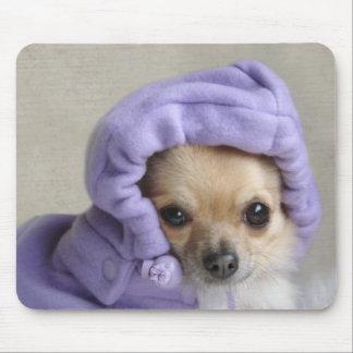 Chihuahua in hoodie mousepad