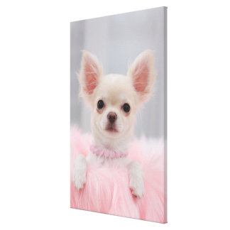 Chihuahua In Pink Canvas Print