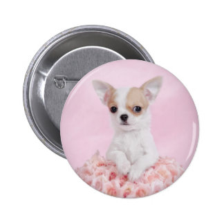 Chihuahua in pink with roses pinback button