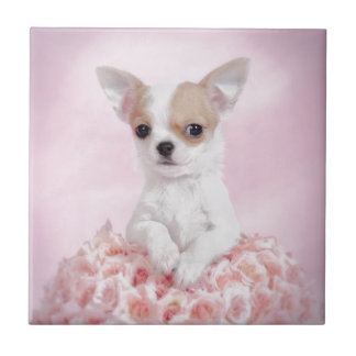 Chihuahua in pink with roses small square tile