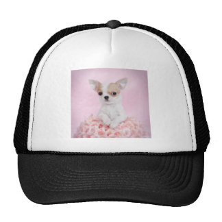 Chihuahua in pink with roses trucker hat