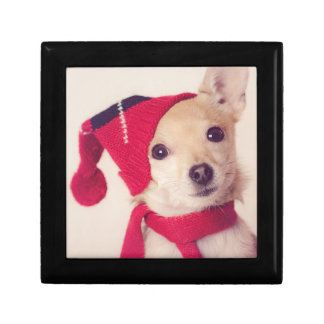 Chihuahua In Winter Cap Gift Box