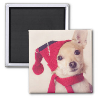 Chihuahua In Winter Cap Magnet