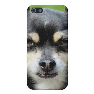¡Chihuahua iPhone 5 Cárcasa