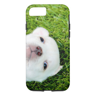 chihuahua iPhone 8/7 case