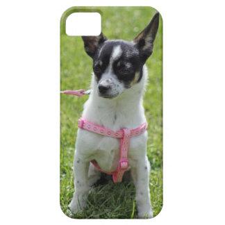 chihuahua  iphone case iPhone 5 case