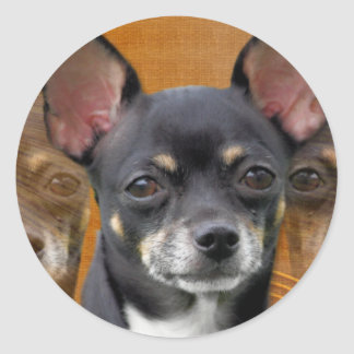 Chihuahua Isabella Cresent Moon Stickers