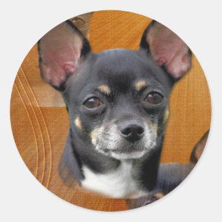 Chihuahua Isabella Cresent Moon Sticker