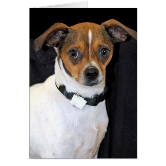 Chihuahua-Jack Russell Terrier Photo Card