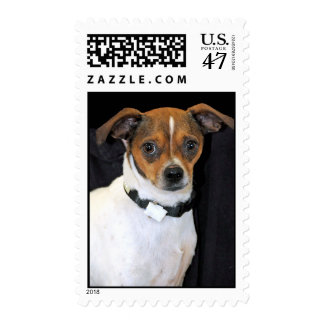 Chihuahua-Jack Russell Terrier Photo Postage
