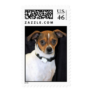 Chihuahua-Jack Russell Terrier Photo Postage Stamp