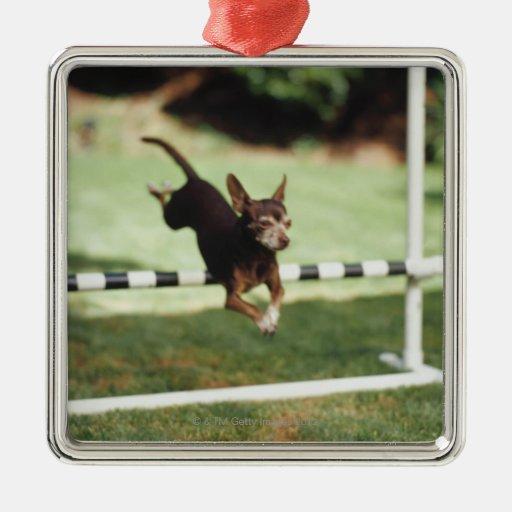 Chihuahua Jumping Hurdle Christmas Tree Ornaments