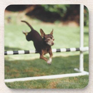 Chihuahua Jumping Hurdle Coaster