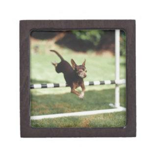 Chihuahua Jumping Hurdle Jewelry Box
