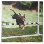 Chihuahua Jumping Hurdle Large Square Tile
