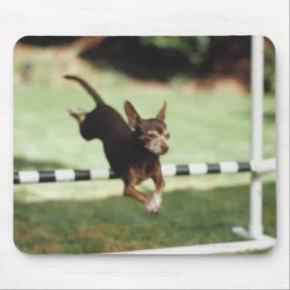 Chihuahua Jumping Hurdle Mouse Pad