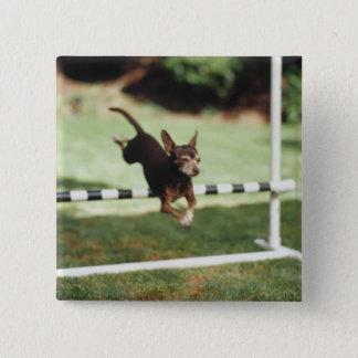 Chihuahua Jumping Hurdle Pinback Button