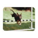 Chihuahua Jumping Hurdle Rectangle Magnet