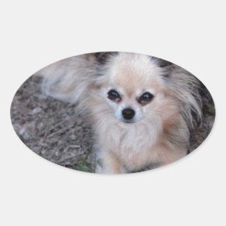 Chihuahua larga de la capa calcomanía ovalada