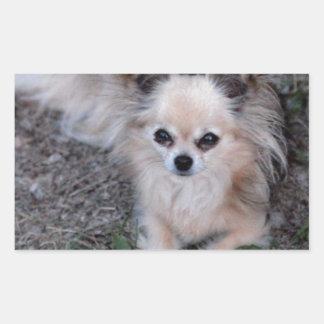 Chihuahua larga de la capa pegatina rectangular