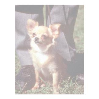 Chihuahua Letterhead