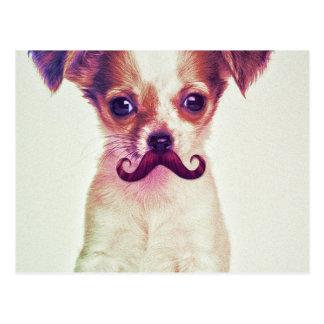 Chihuahua linda con el bigote divertido púrpura tarjetas postales