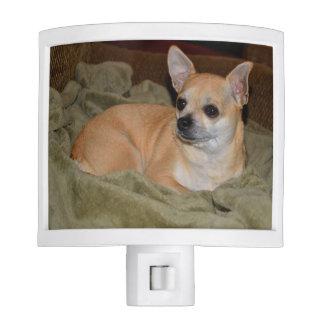 Chihuahua linda luz de noche