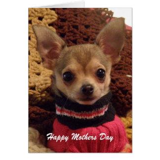 Chihuahua linda: Tarjeta del día de madres