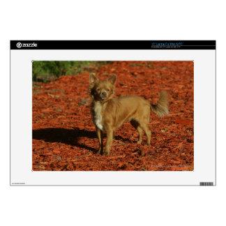 """Chihuahua Looking at Camera 15"""" Laptop Decal"""