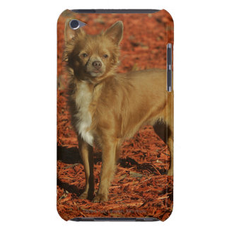 Chihuahua Looking at Camera Barely There iPod Case