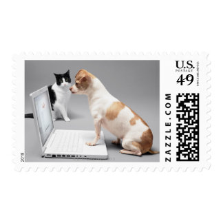 Chihuahua looking into the screen of a laptop postage stamp