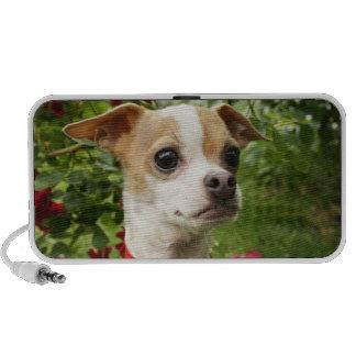 Chihuahua Love Mini Speaker