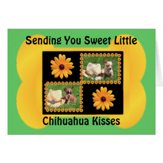 Chihuahua Lover Delight Card