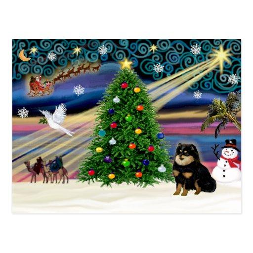 Chihuahua mágica del navidad (negro y moreno) postal