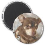 Chihuahua Magnet Refrigerator Magnet