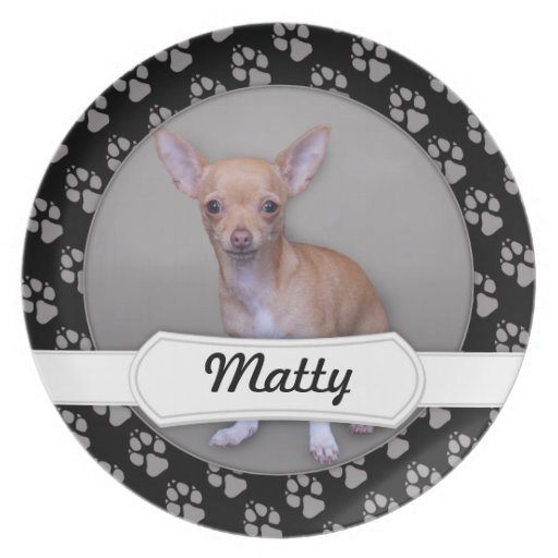 Chihuahua - Matty Plates