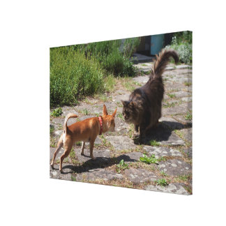 Chihuahua Meets Cat Canvas Print