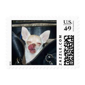 Chihuahua Meetup Logo Postage Stamps
