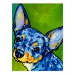 Chihuahua Merle 2 Post Card