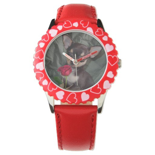 Chihuahua MerryRose que celebra un reloj del rosa