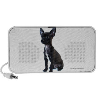 Chihuahua Mini Speaker