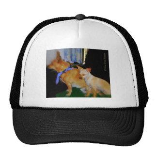 Chihuahua minúscula gorra